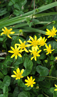 image of yellow flowers